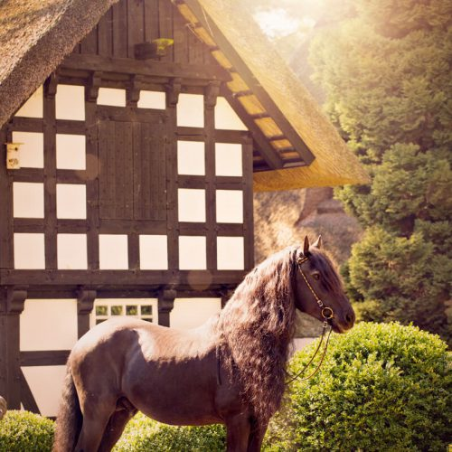 Equine Pferdefotografie Bremen Verden Birte Wührmann Fotografie